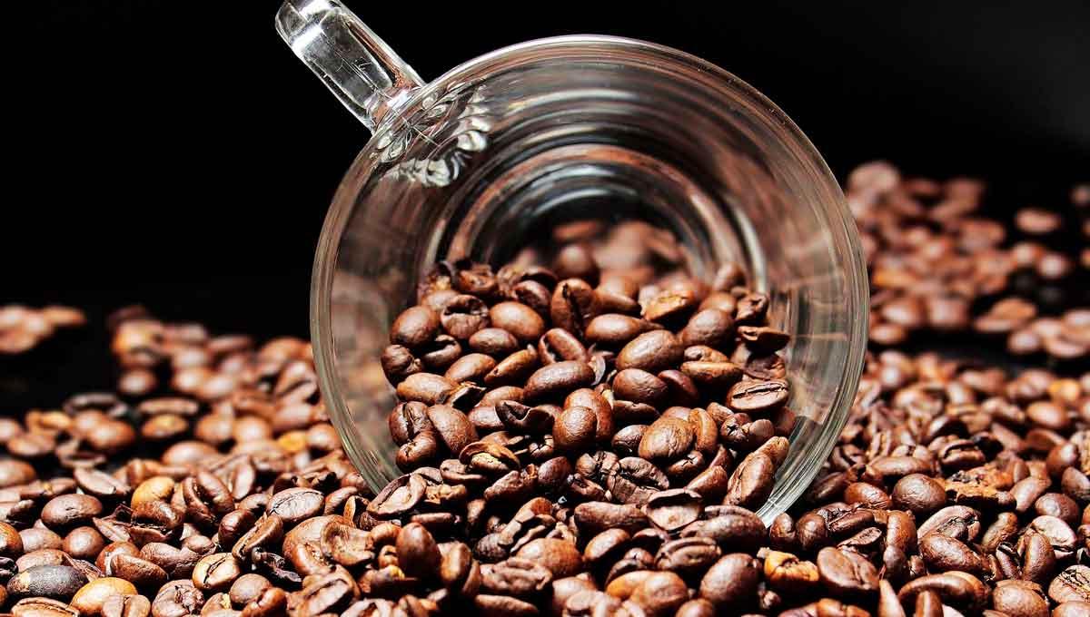 productores de café, granos