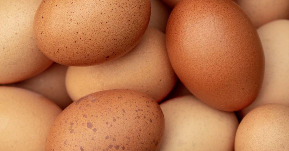 Importancia de los huevos